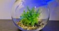Fishbowl with 4 types of gravel
